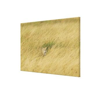 Kenya, Masai Mara Canvas Print