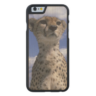 Kenya, Masai Mara Game Reserve, Close-up Carved Maple iPhone 6 Case