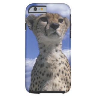 Kenya, Masai Mara Game Reserve, Close-up Tough iPhone 6 Case