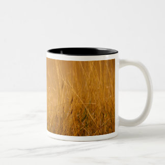 Kenya: Masai Mara Game Reserve, head of female Two-Tone Coffee Mug