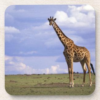 Kenya, Masai Mara Game Reserve. Kenyan Giraffe Coaster