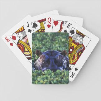 Kenya, Masai Mara National Reserve. Playing Cards