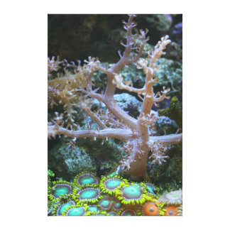 Kenya Tree Coral and Zoanthids - The Reef Collecti Canvas Print