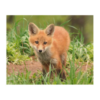 keychain with photo of red fox kit wood print