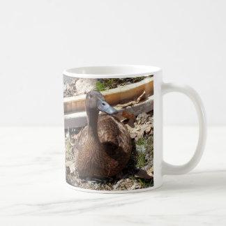 Khaki Campbell duck mug
