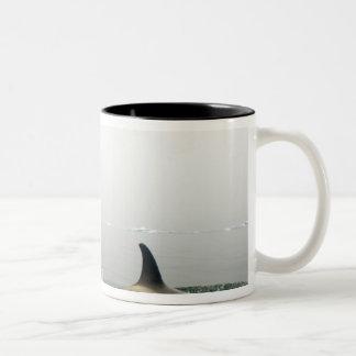 killer whales (orcas), Orcinus orca, pod 2 Mugs