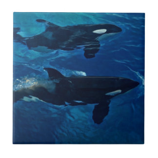Killer Whales Small Square Tile