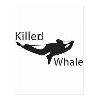 Killerd Whale Postcard
