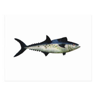 King Mackerel The MUSEUM Zazzle Gifts Post Card