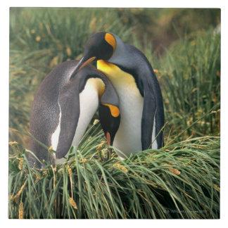 King penguins nuzzling tile