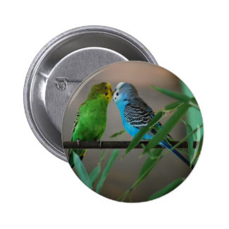 kissing parakeets 6 cm round badge