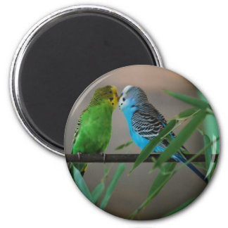 kissing parakeets 6 cm round magnet