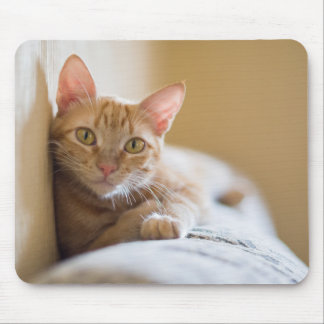 Kitten Lying On The Couch Mouse Pad