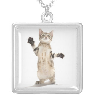 Kitten on White Background Silver Plated Necklace