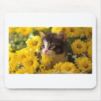 Kitten Sniffs The Yellow Daisies Mouse Pad