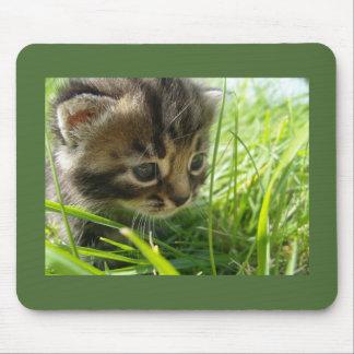 Kitten Stalking Prey Mousepad