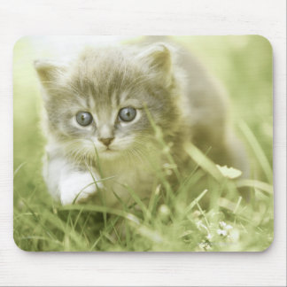 Kitten taking steps in the grass mouse pad
