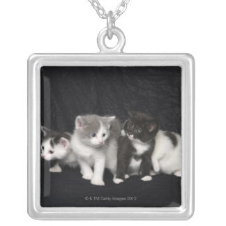 Kittens in a Studio Shot Silver Plated Necklace