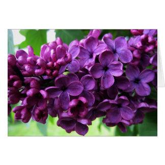 KIW Sparks Lilacs Card