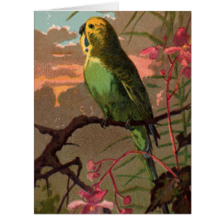 Kiwi the Parakeet Big Greeting Card