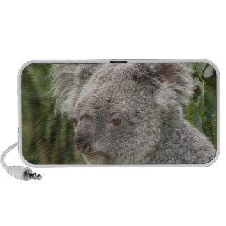 Koala Bear Doodle Speaker