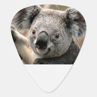 Koala Guitar Picks Guitar Pick