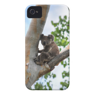 KOALA IN TREE QUEENSLAND AUSTRALIA iPhone 4 Case-Mate CASE