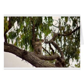 KOALA IN TREE RURAL QUEENSLAND AUSTRALIA CARD