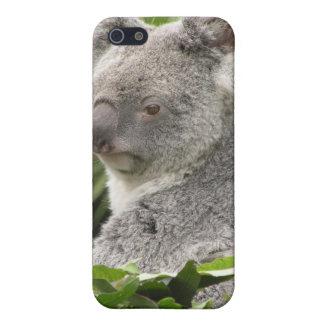 Koala iPhone 4 Case - Animal Photos