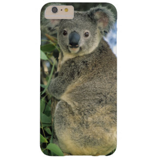 Koala, Phascolarctos cinereus), endangered, Barely There iPhone 6 Plus Case