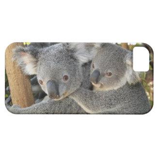 Koala Phascolarctos cinereus Queensland . iPhone 5 Case