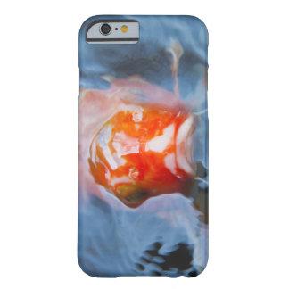 Koi Carp (Cyprinus carpio), Japan Barely There iPhone 6 Case