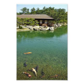 Koi carps in a Japanese garden Photographic Print