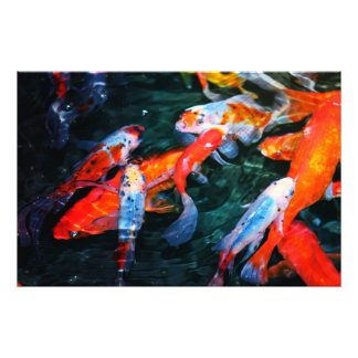Koi Fish Photo Print