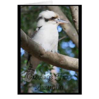 Kookaburra Greetings from Australia Greeting Card