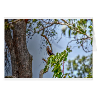 KOOKABURRA QUEENSLAND AUSTRALIA ART EFFECTS CARD