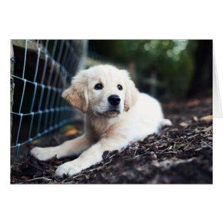 Labrador Puppy Playing In The Garden Card