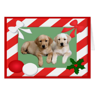 Labrador Retriever Christmas Card Frame