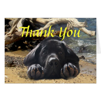 Labrador Retriever Thank You Card