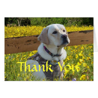 Labrador Retriever Thank You Card At The Fence