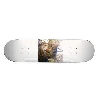 lachlantopcat Skateboard