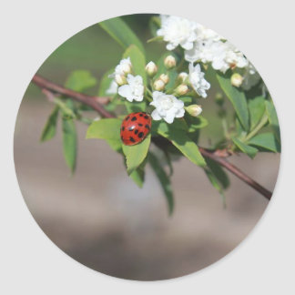 Lady Bug and White Flowers Classic Round Sticker
