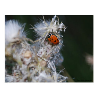 lady bug postcards