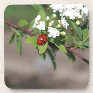 Lady Bug resting near so white flowers in bloom Drink Coaster