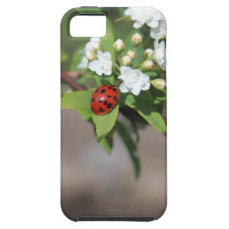 Lady Bug resting near so white flowers in bloom iPhone 5 Cases