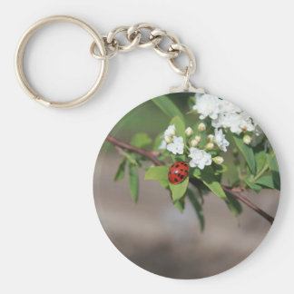 Lady Bug resting near so white flowers in bloom Key Ring
