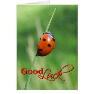 Ladybug on a blade of grass - Good luck Card