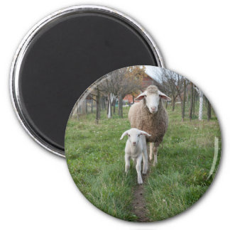 Lamb and sheep magnet