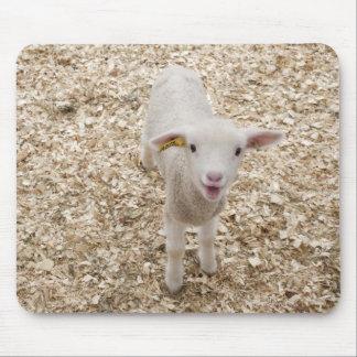 Lamb Mouse Pad