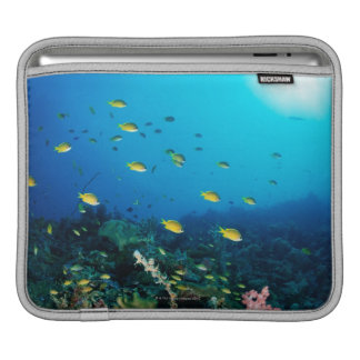 Large group of Ocellated Orange fish swimming iPad Sleeves